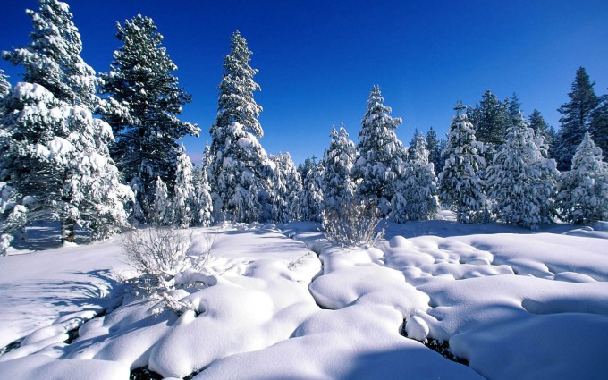 snow wallpaper desktop