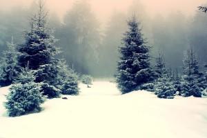snow wallpaper tablet