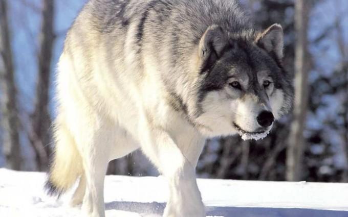 snow winter animal