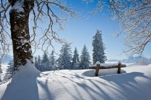 snow winter scenery