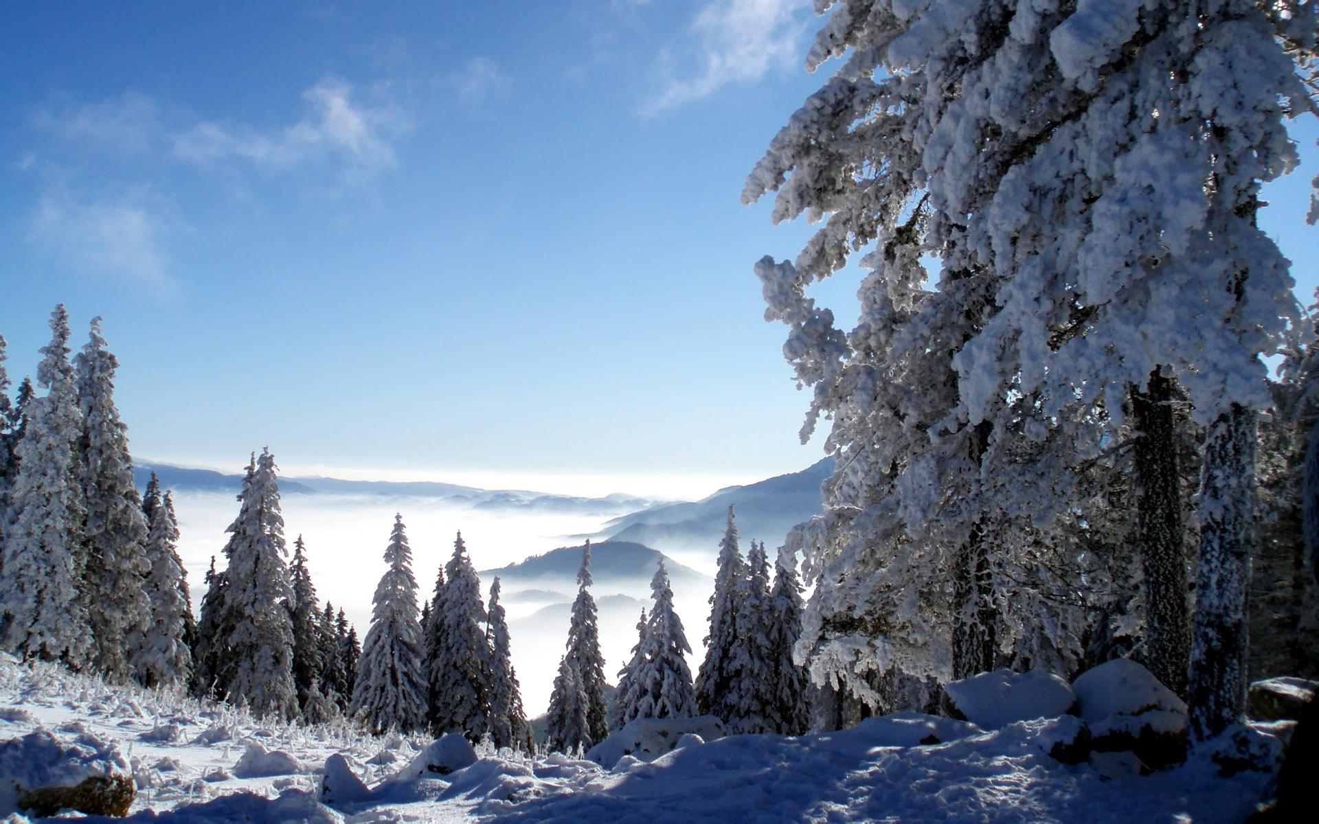 snowy trees free