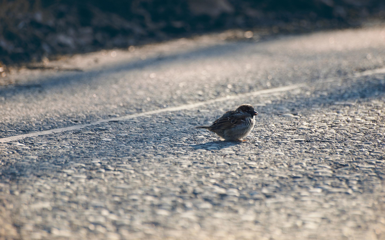 sparrow photo