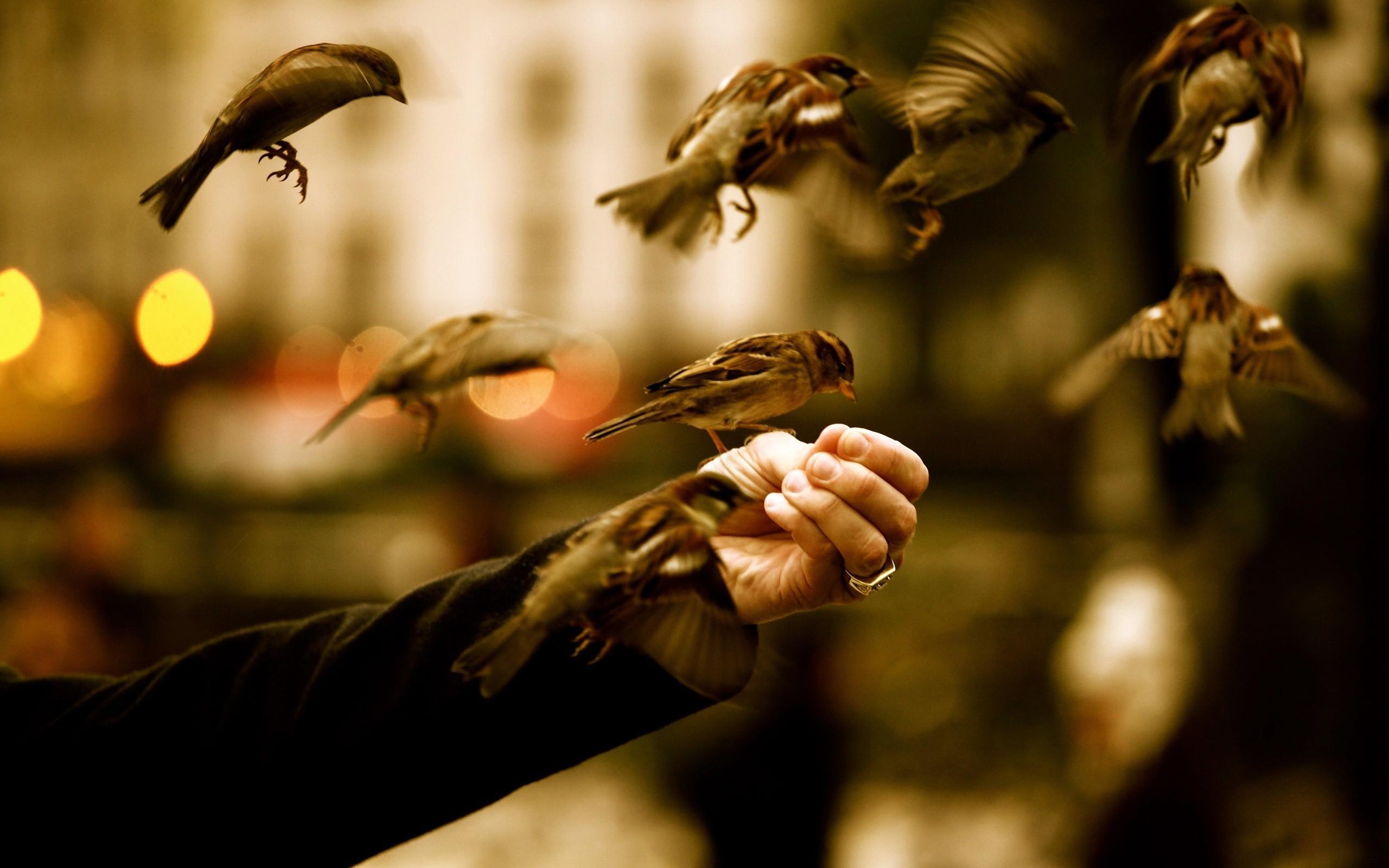 sparrow photos