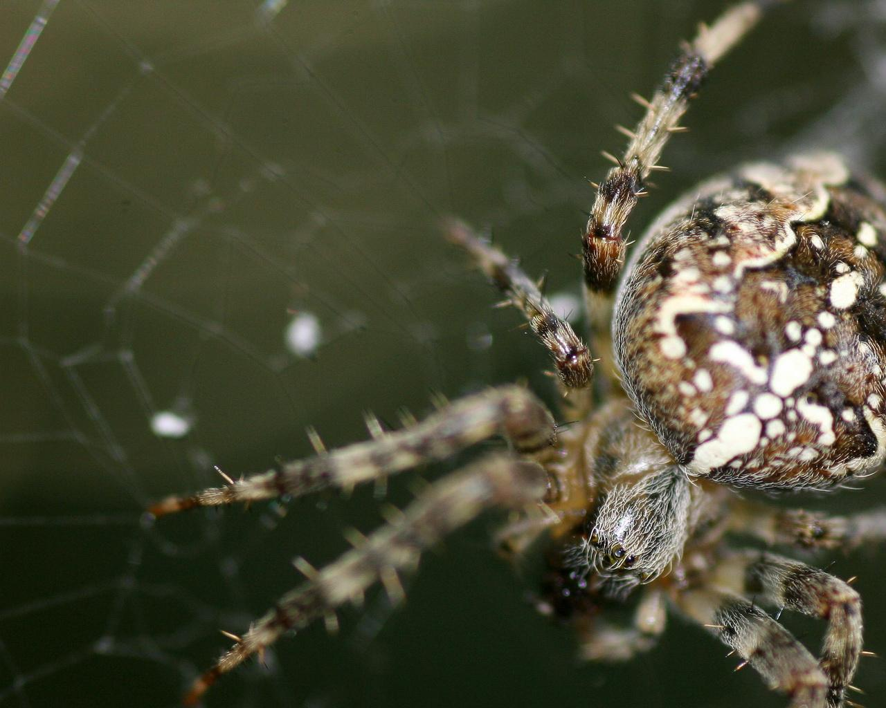 spider images hd