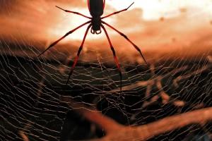 spider picture 1080p