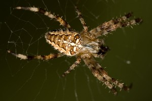 spider pictures hd