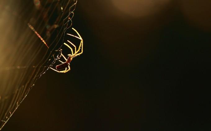 spider wallpaper computer
