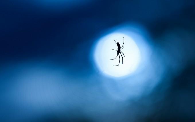 spider wallpaper desktop