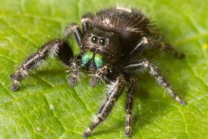 spider wallpapers hd