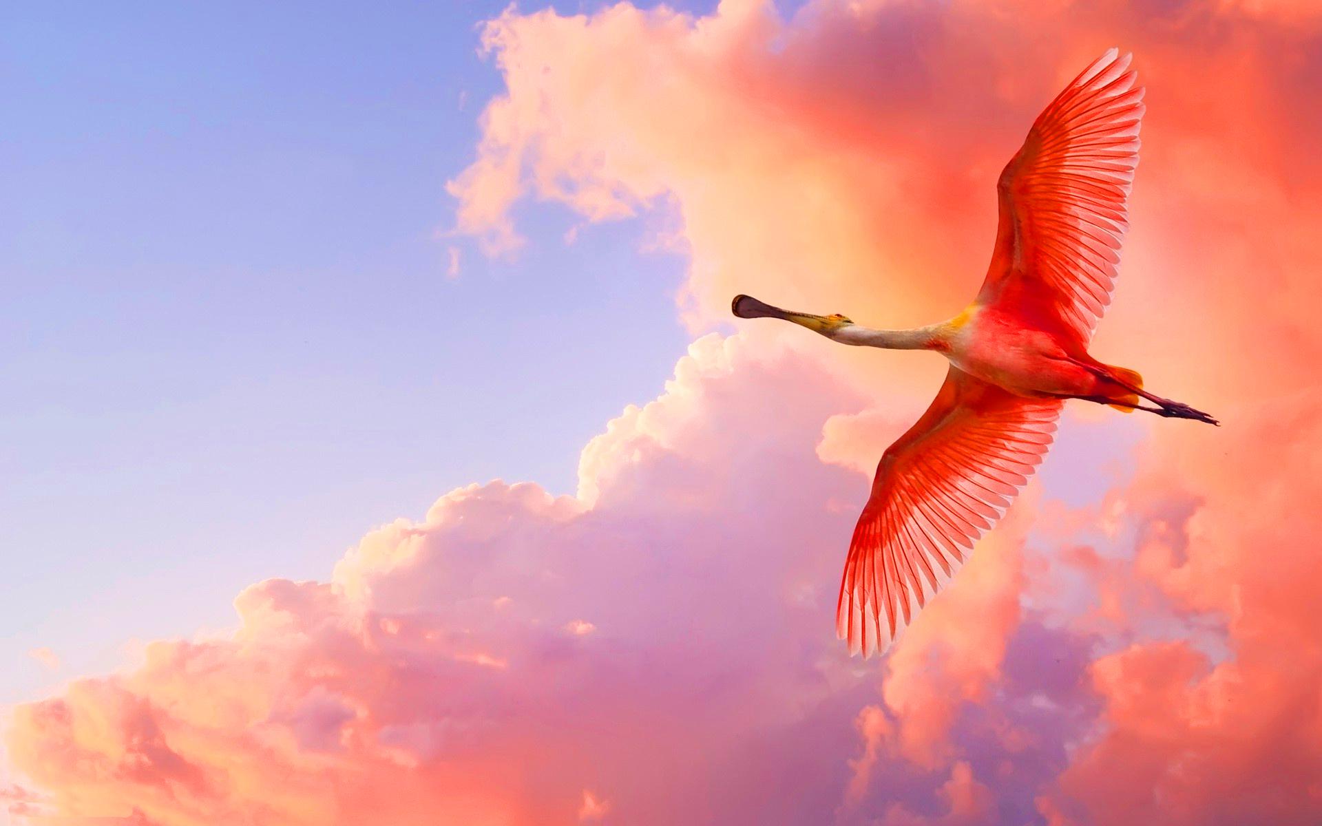 spoonbill hd bird