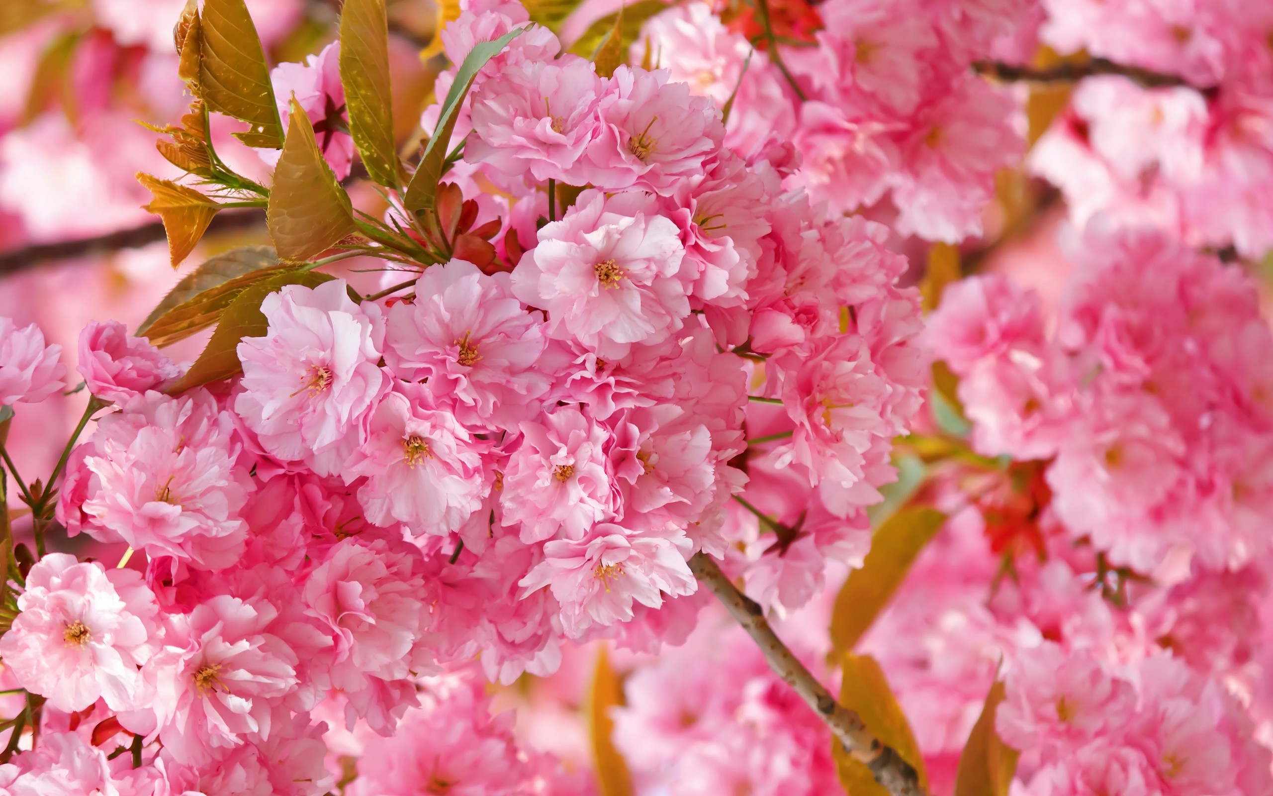 spring backgrounds hd