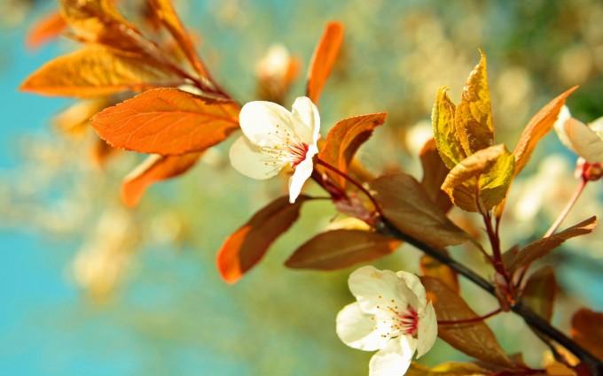 spring full hd wallpaper