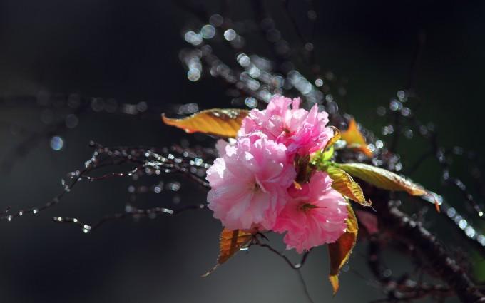 spring nature wallpaper