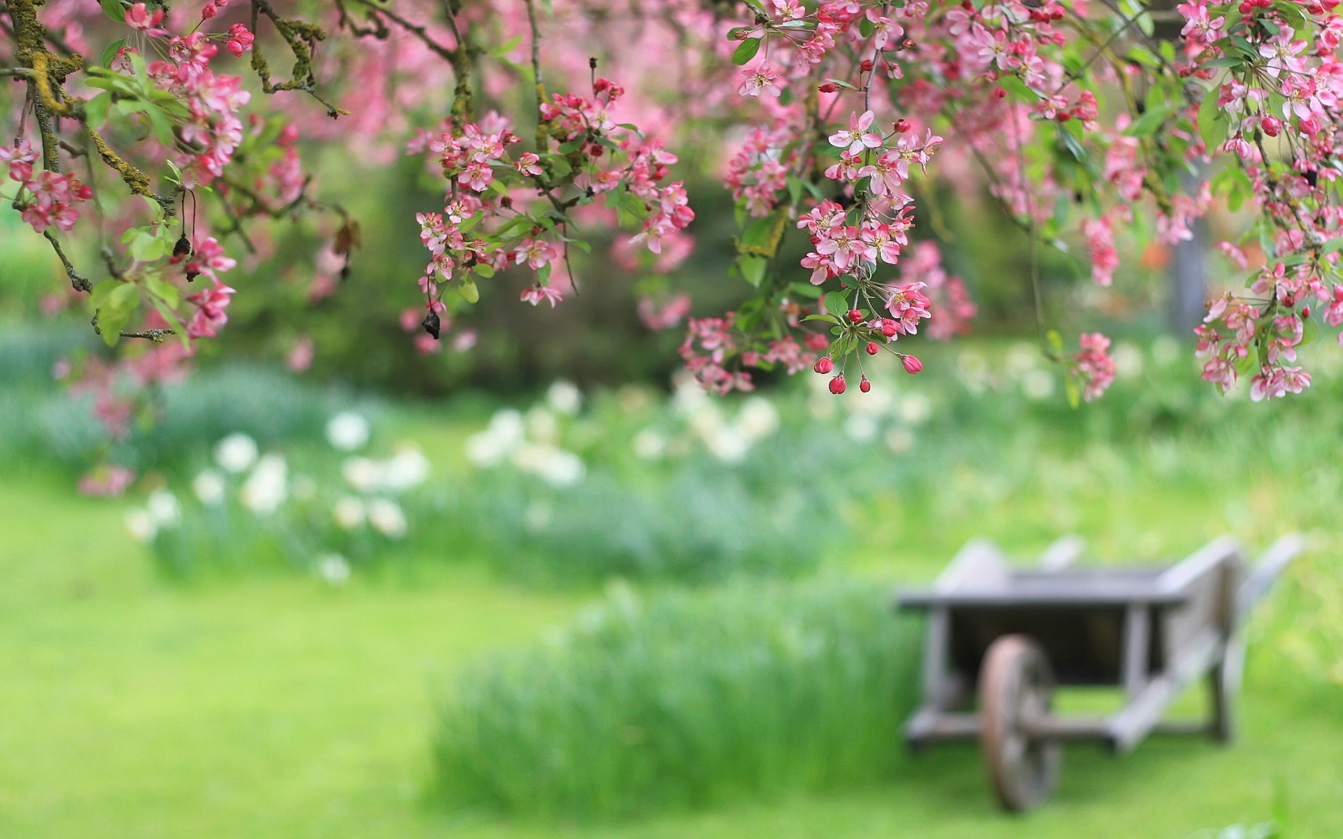 spring wallpaper hd
