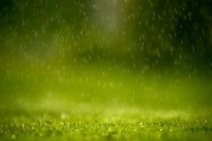 spring wallpaper grass