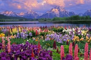 spring wallpaper landscape