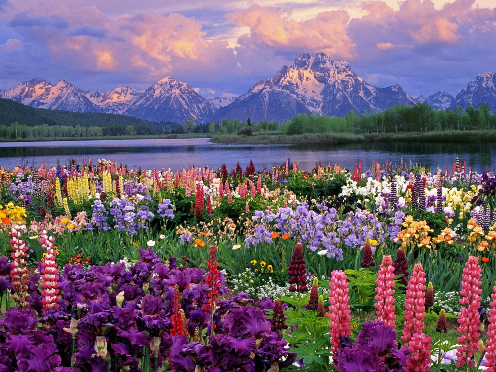 spring wallpaper landscape