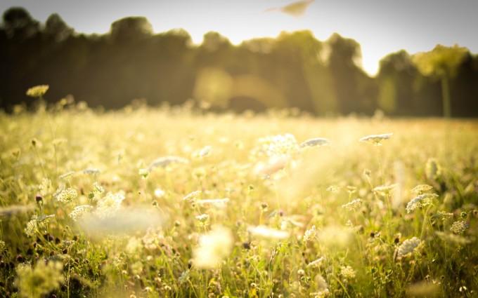 spring wallpaper meadow