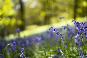 spring wallpaper meadow blue