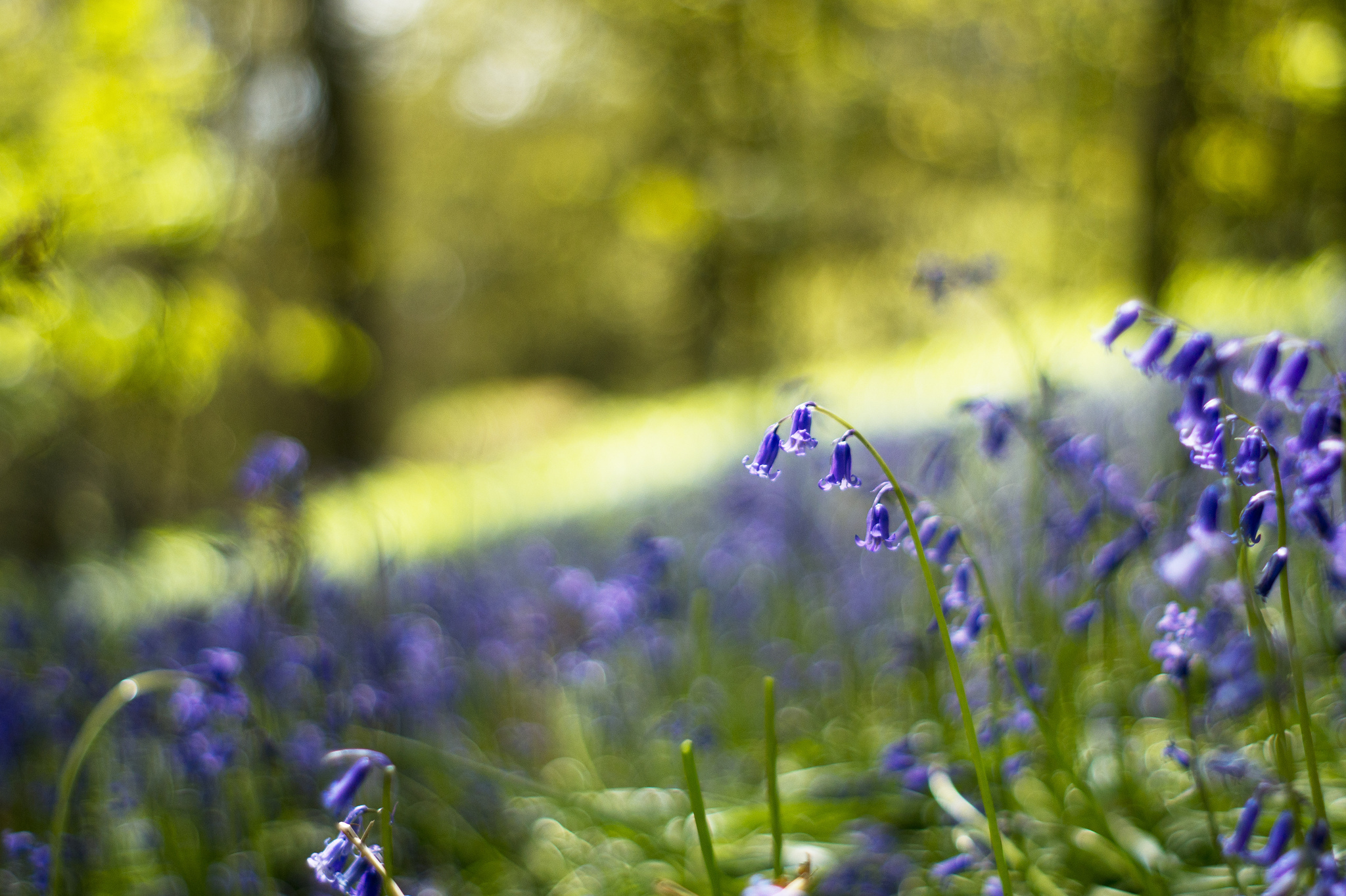 spring wallpaper meadow blue