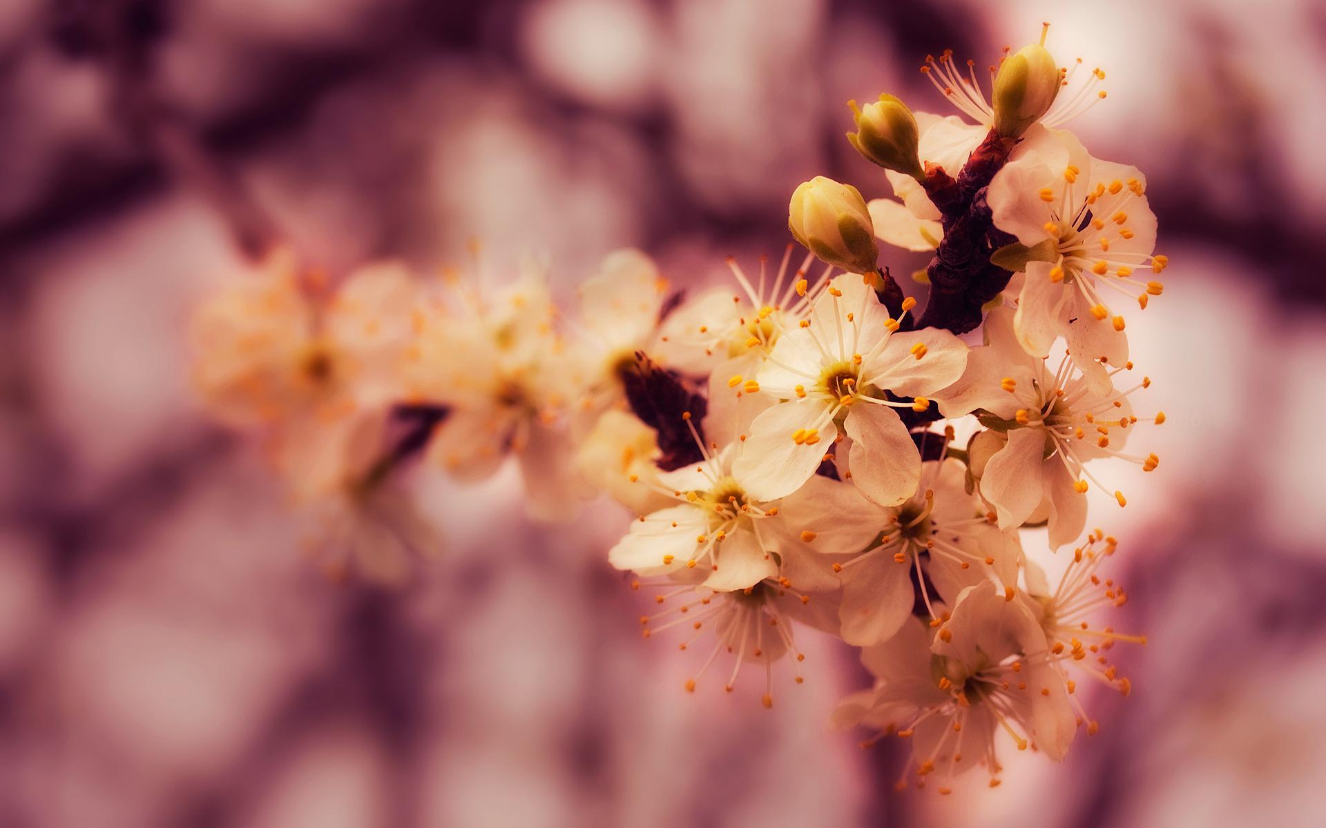 spring wallpaper petals