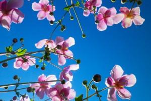spring wallpaper pink