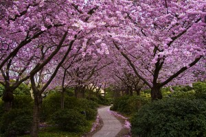 spring wallpaper purple