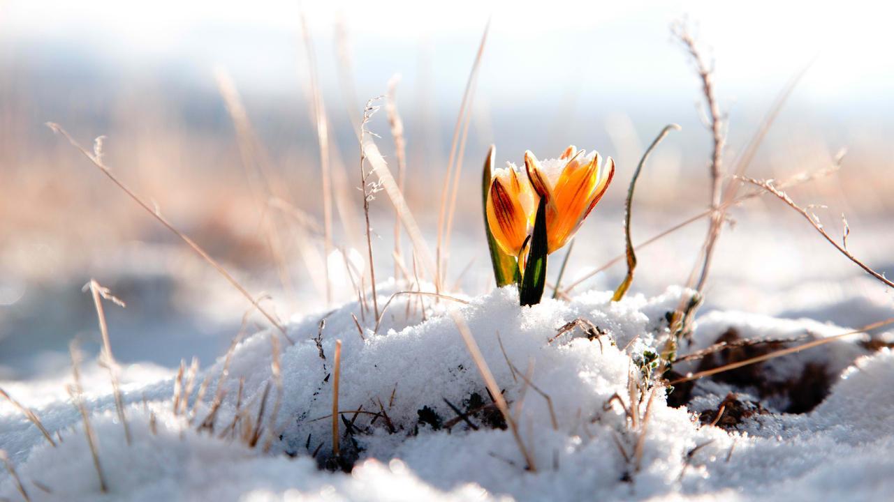 spring wallpaper snow