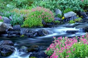 spring wallpaper waterfall