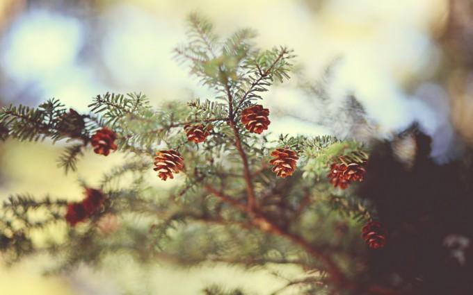 spruce wallpaper desktop