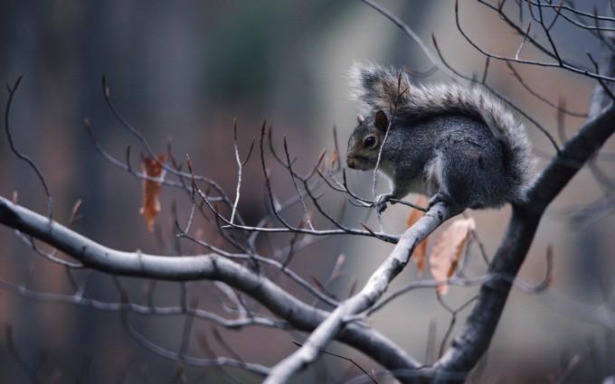 squirrel background