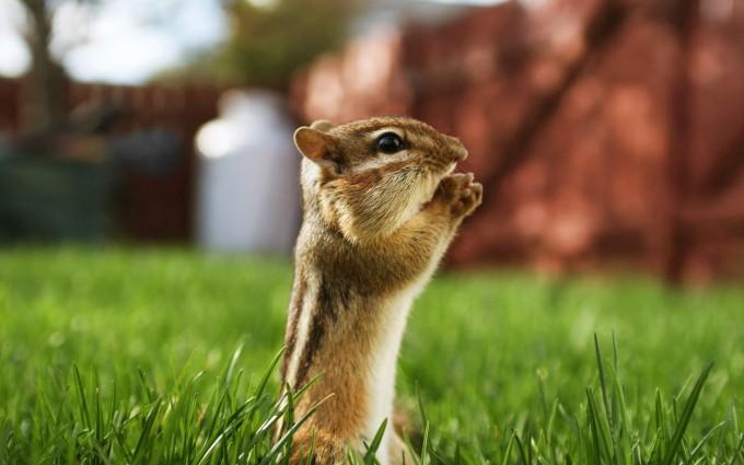 squirrel images