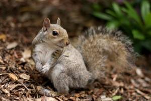 squirrel photos funny