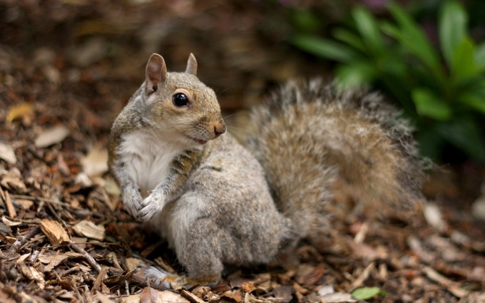 Squirrel photos funny hd desktop wallpapers 4k hd - Funny squirrel backgrounds ...
