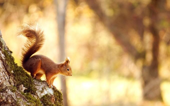squirrel pic