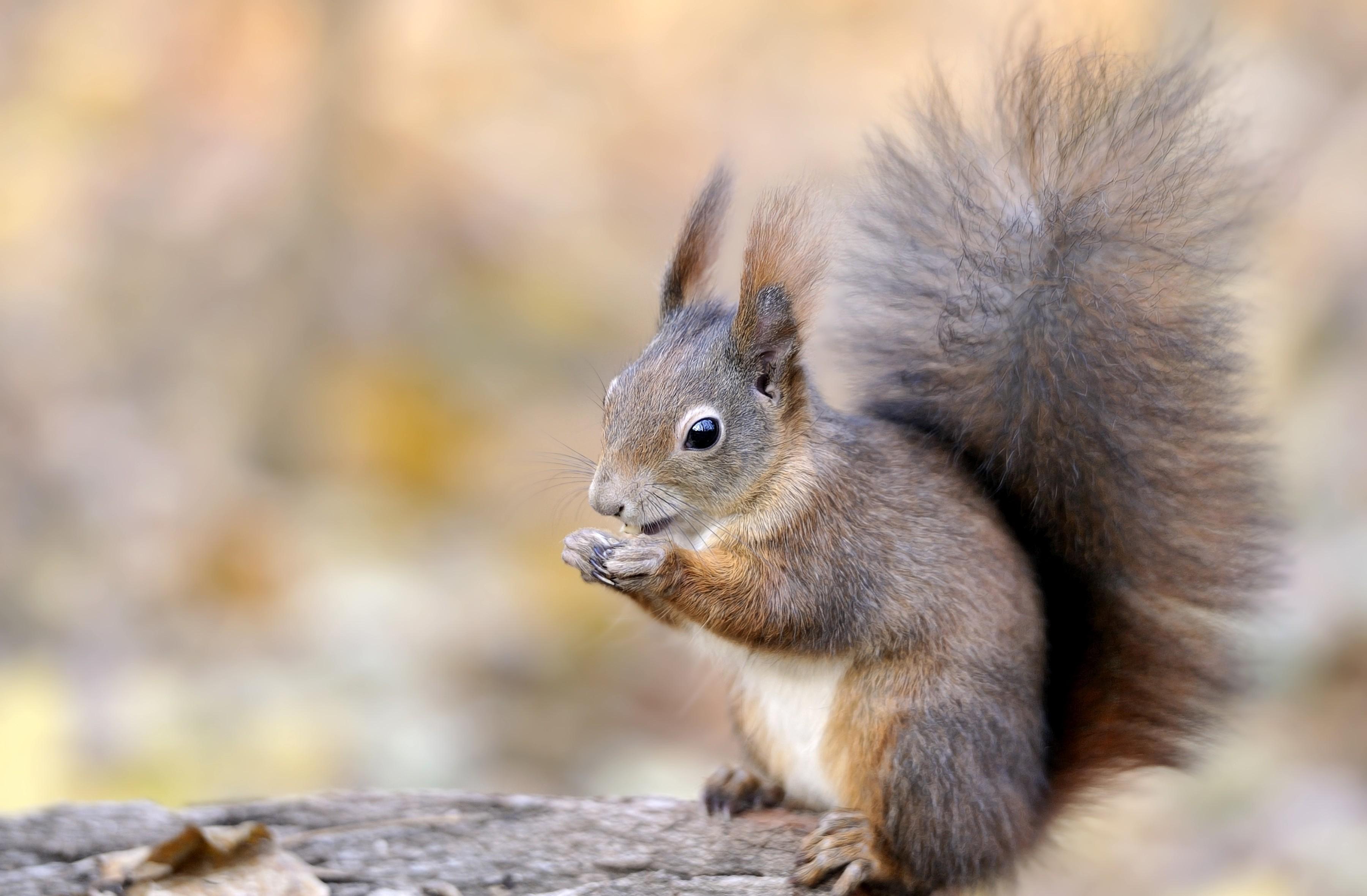 squirrel pics free