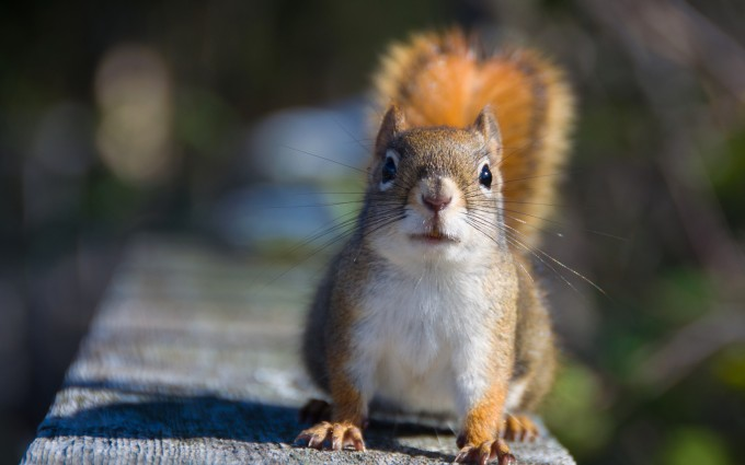 squirrel pictures free