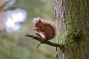 squirrel screensaver