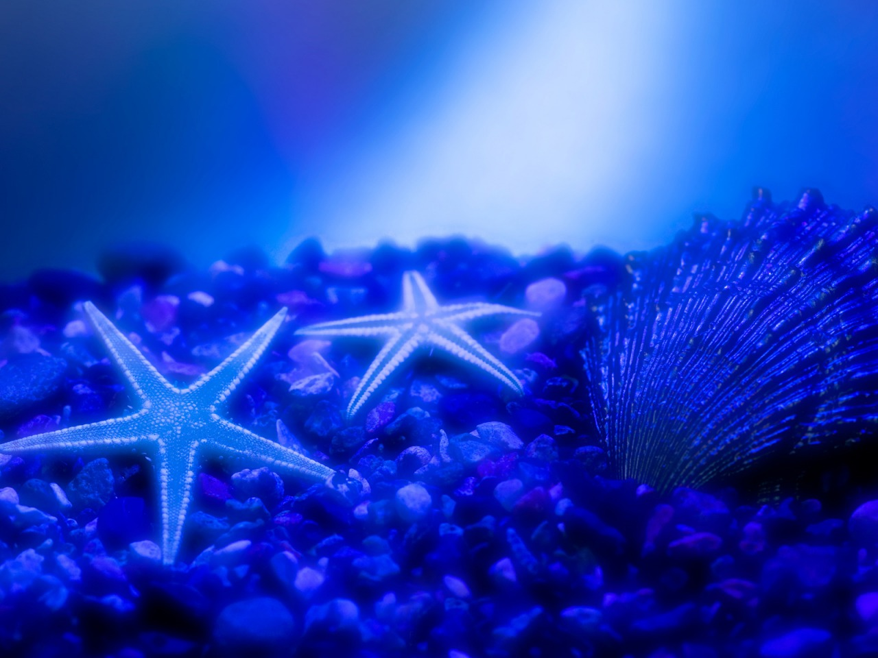 star fishes