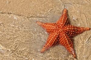 star fishs