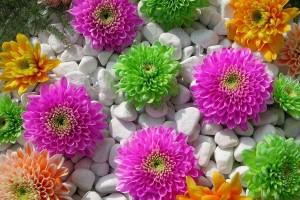stone wallpaper flowers