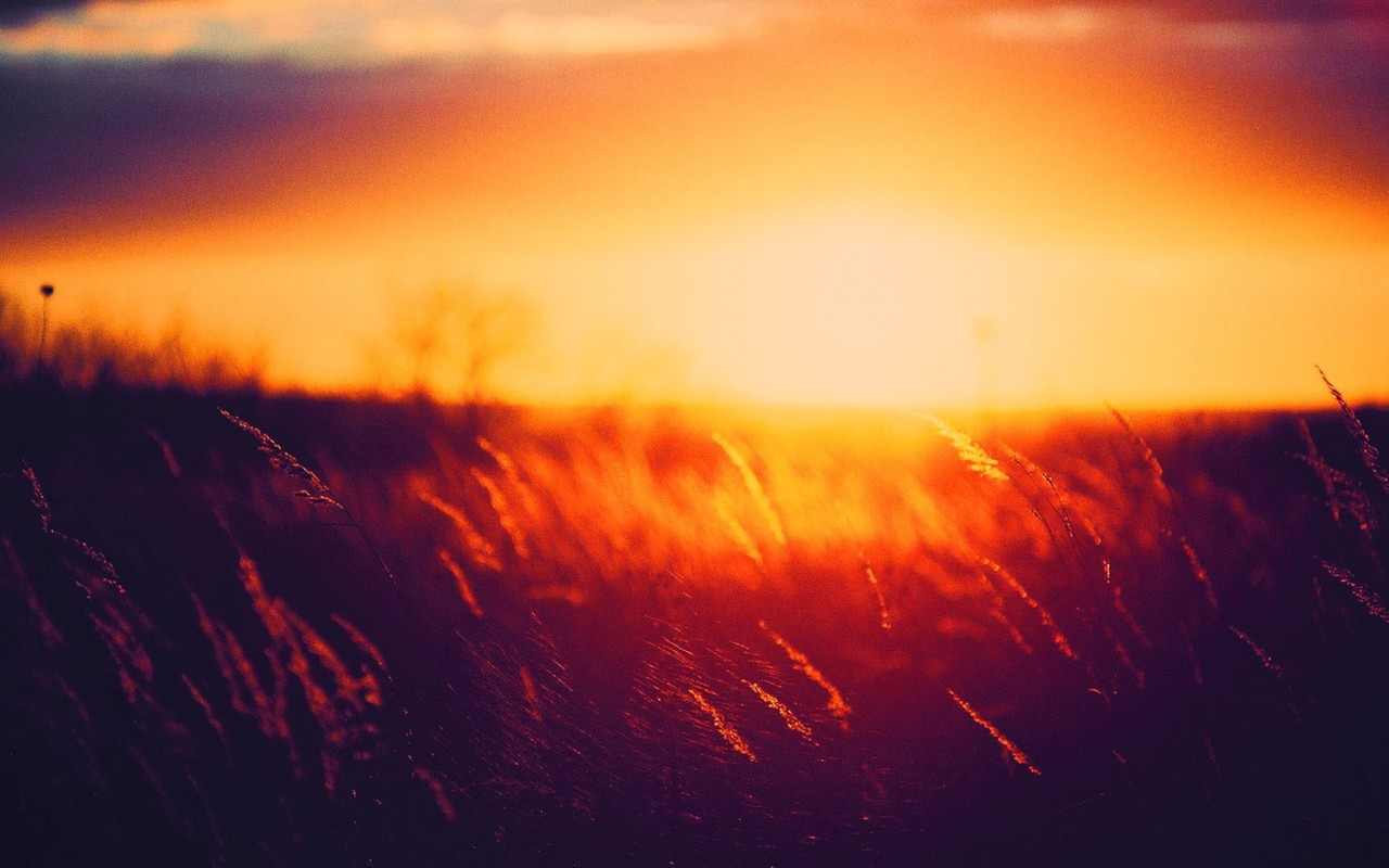 summer sunset wallpaper