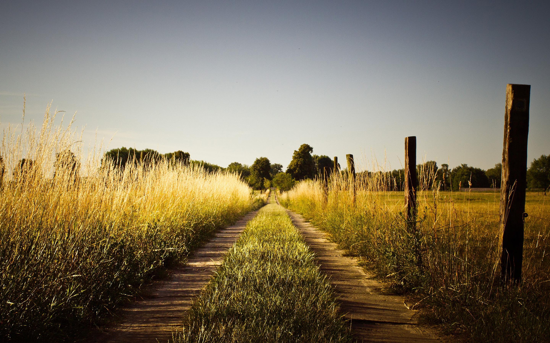 summer wallpaper countryside