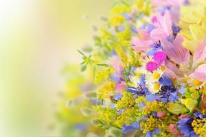 summer wallpaper flowers cute