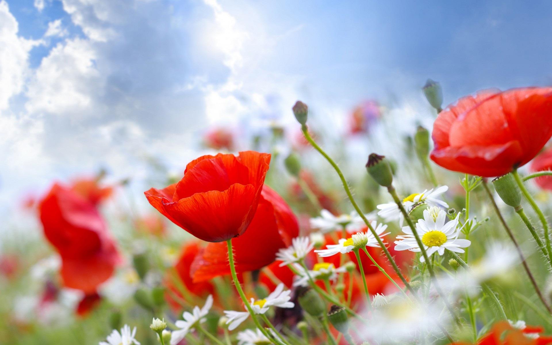 summer wallpaper hd flowers