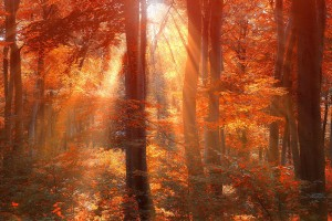 sun rays hd forest