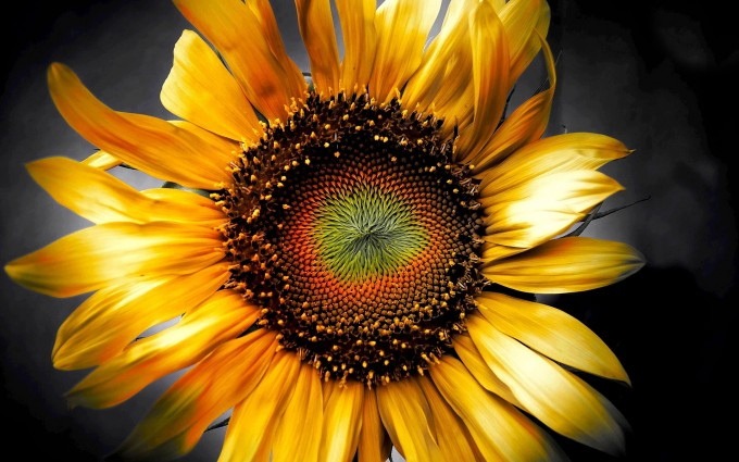 sunflower art 3d