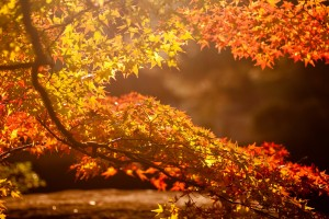 sunlight wallpaper autumn
