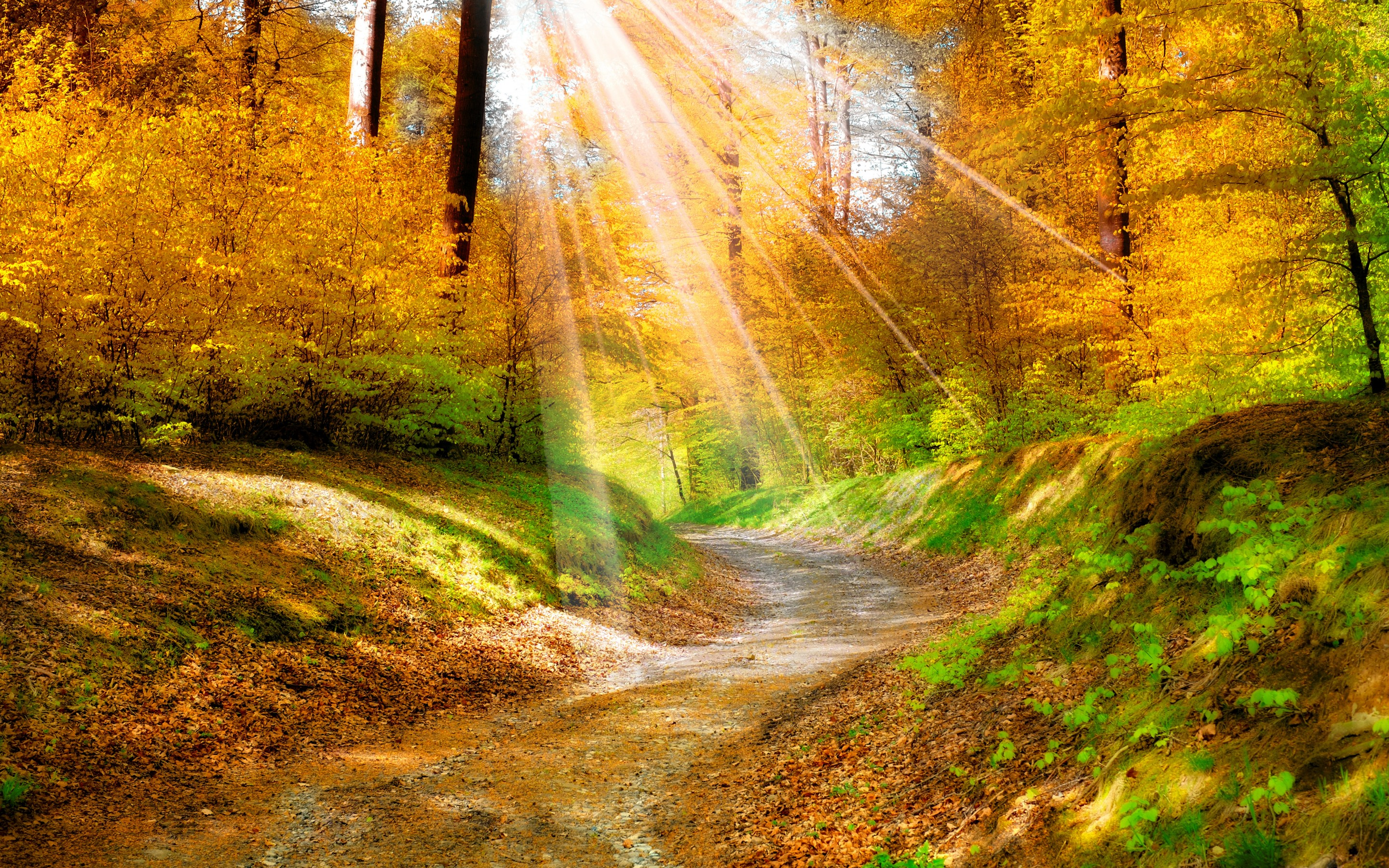 sunlight wallpaper autumn forest
