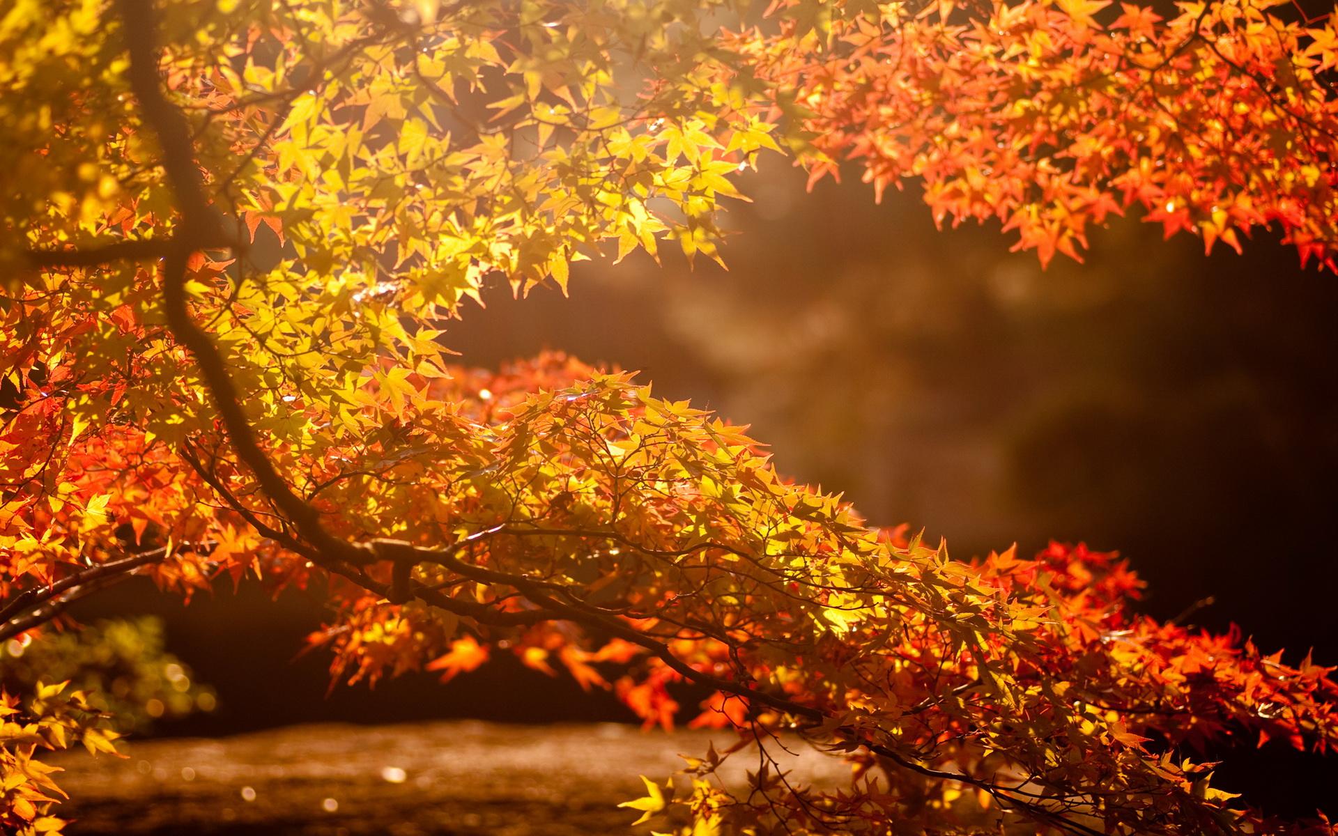 sunlight wallpaper autumn